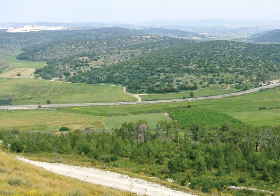 The heavily forested hills marked for new housing are home to fragile populations of several dozen indigenous mammal and bird species, for whom the Eila Valley is the last remaining habitat in Israel (Wikimedia)