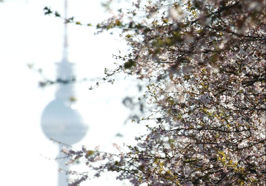 THE TELEVISION Tower is seen behind blooming cherry blossom trees in Berlin, last month. The city is home to a thriving Israeli community. (Fabrizio Bensch/Reuters)
