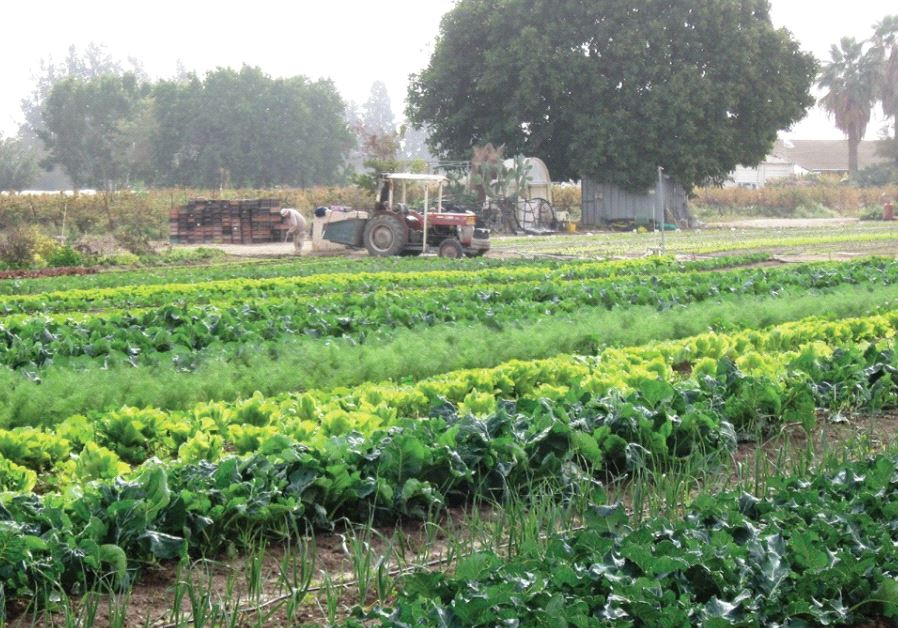 The organic fields  (Courtesy)