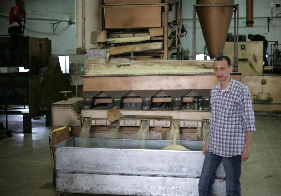 Ala Tamam, 43, a 4th generation tahini producer for Karawan manages the company's business with Israel. He stands alongside an nearly century old seed cleaning machine from Aleppo Syria at his Nablus factory, May 10, 2017 (photo credit: ELIYAHU KAMISHER)