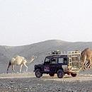 A.A. Jeep Tours