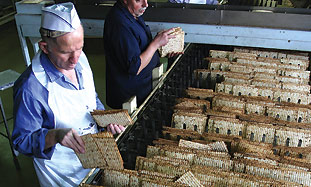 Yehuda Matzos. Forty tons of matza a day.