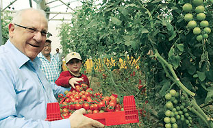 Reuvin Rivlin picks tomatoes with his grandson Mat