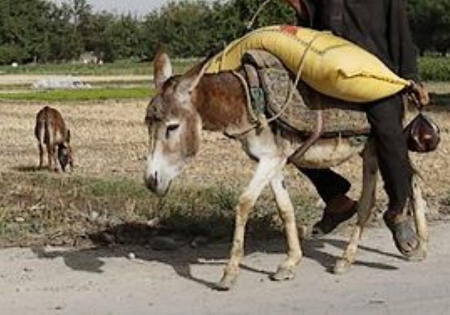 Donkey Detonated On Gaza Border Middle East Jerusalem Post