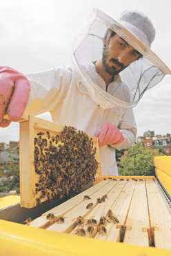 BEEHIVE DESIGNER Johannes Paul removes a brood fra