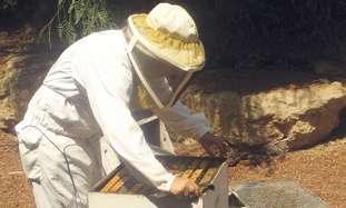 Bee keeper at Kibbutz Yad Mordechai