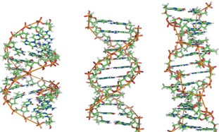 Strings of DNA