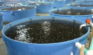 Бассейн своими руками для разведения рыбы видео