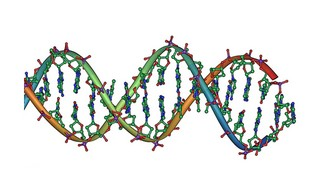 DNA strand double helix