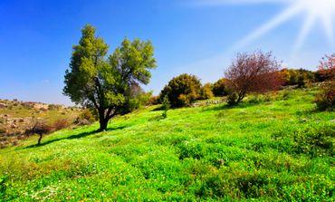 Mt. Meron in the Galilee