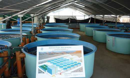 fish farm 521