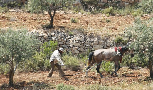 Palestinian Farmer, West Bank