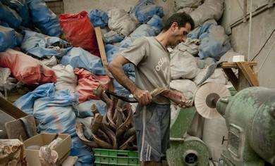 The BarSheshet-Ribak Shofar factory