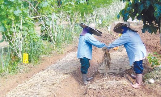 Thai farmers
