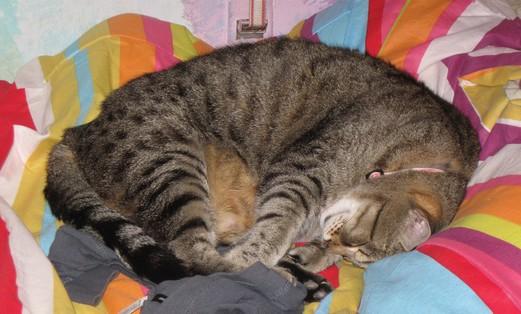 Yum-Yum the cat