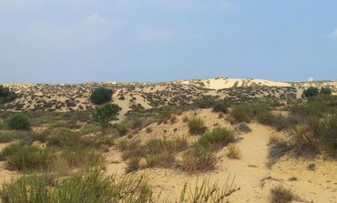 Ashdod dunes where industrial zone set to be built