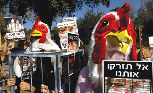 Animal rights protesters in Israel