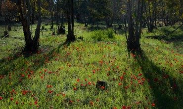 Ruchama Forest