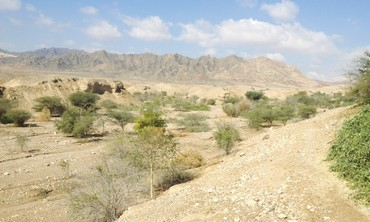 Holland Park's forest, north of Eilat.