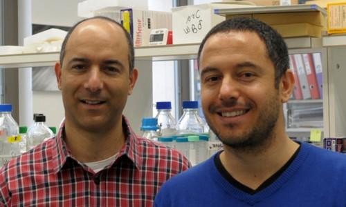 Dr. Rotem Karni and graduate student Avi Maimon.