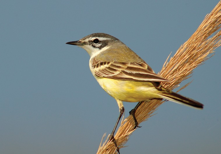 New Worlds: How did birds and mammals become warm blooded ...