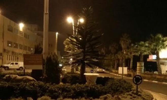 Christmas tree in Acre
