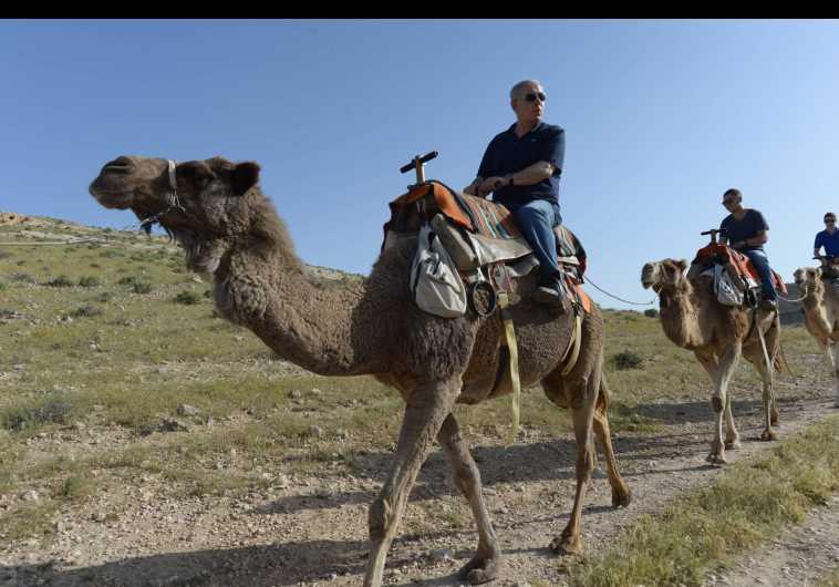 netanyahus camel