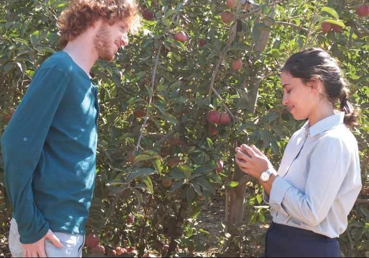 'Apples in the Desert' movie