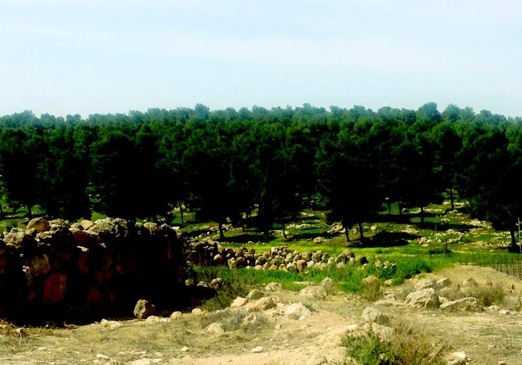La forêt de Yatir