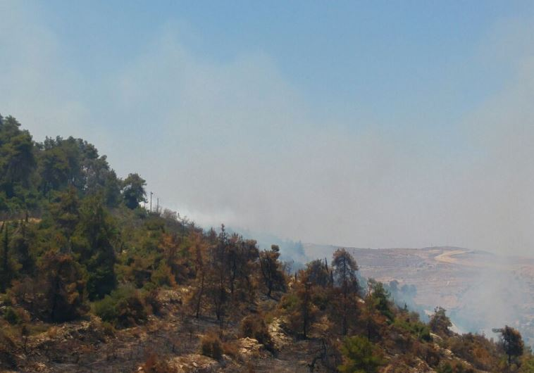 Burnt forest near Ma'ale Hahamisha, July 4, 2015