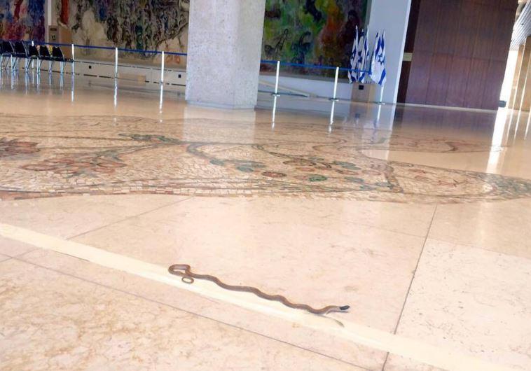 Knesset snake