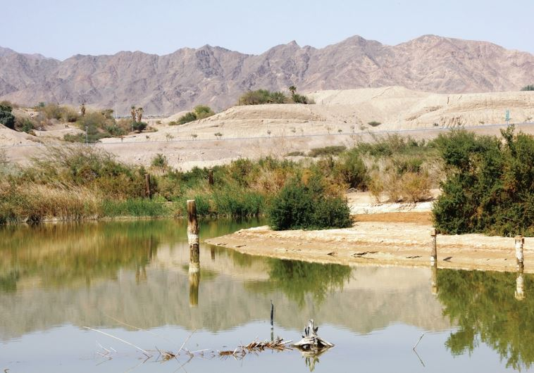 Eilat bird center