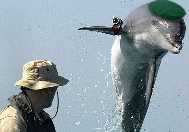 A military dolphin