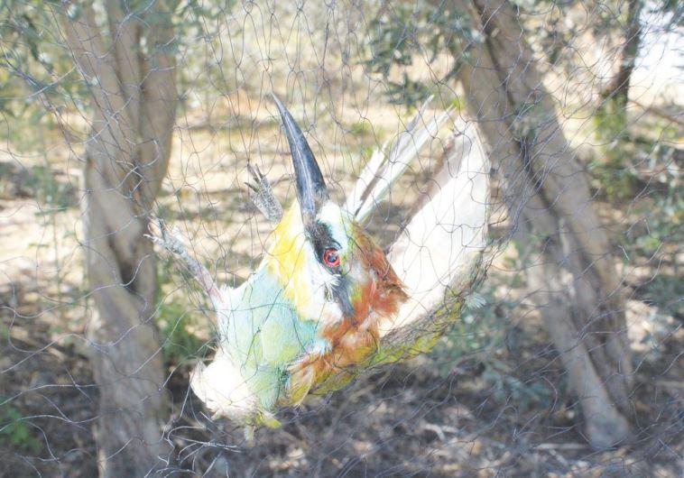 Bird in a trap
