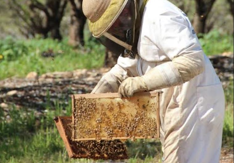 beekeeper honey