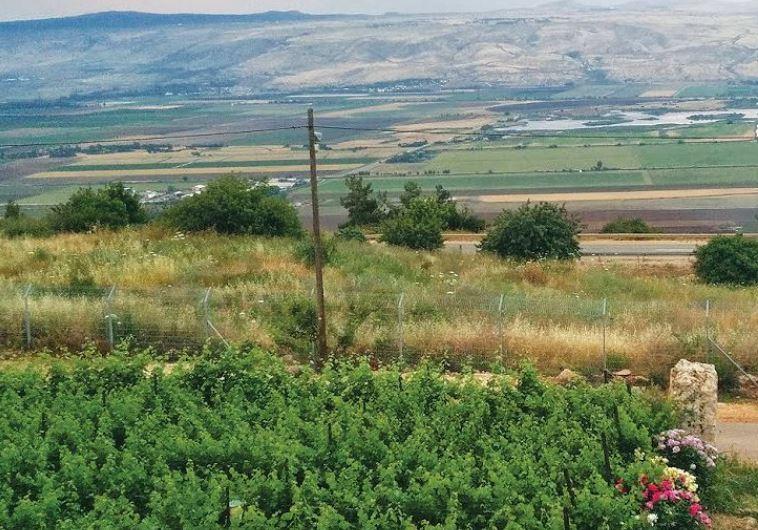 Na'aman Winery