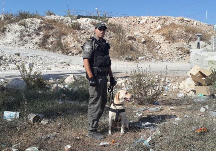 Border police dog