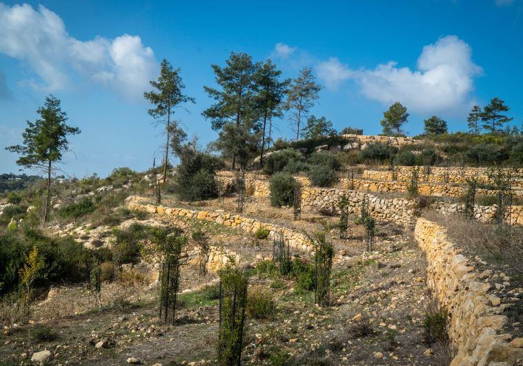 Carmel forest terraces