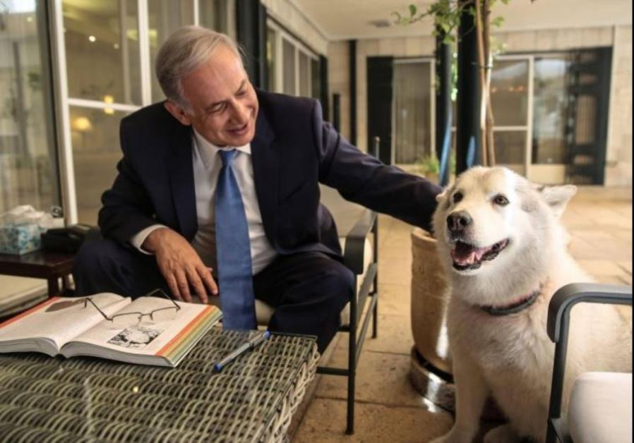 Netanyahu steps up to save animals' lives