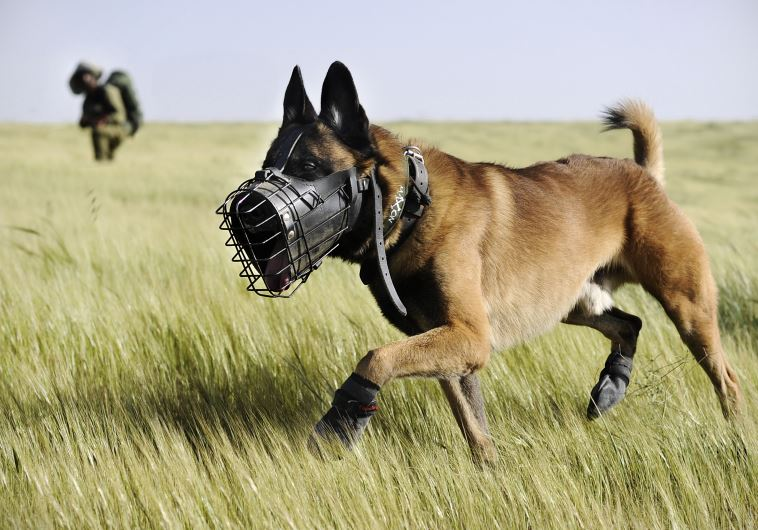 IDF search dog serving in the Oketz unit