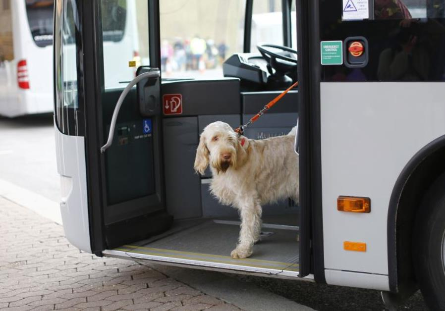 Dogs on buses