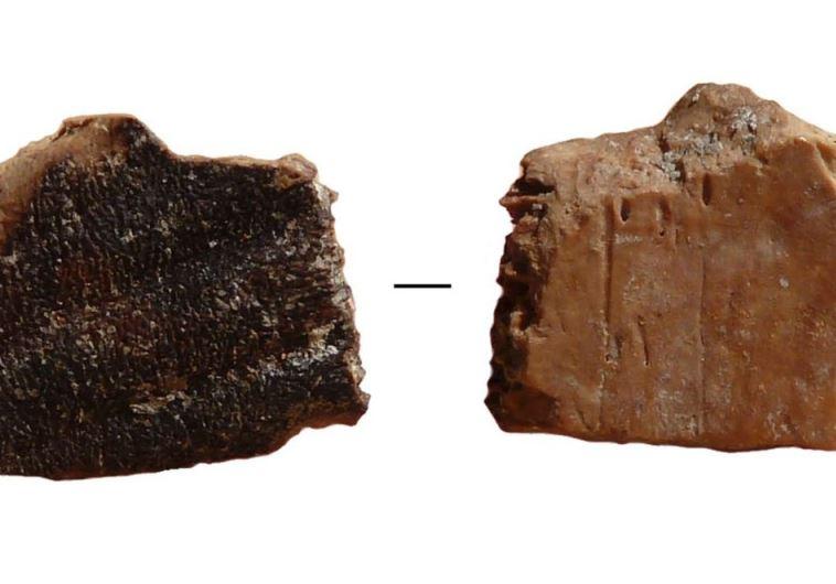Burn marks on a prehistoric tortoise bone found in Quesem Cave, outside of Tel Aviv