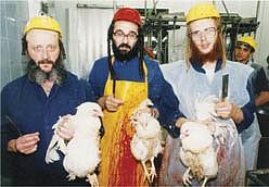 New Zealand bans Kosher slaughter