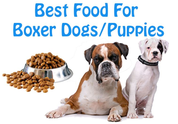 Dog Lovers: Know The Best Dog Foods for Boxer Breed Dogs/Puppies