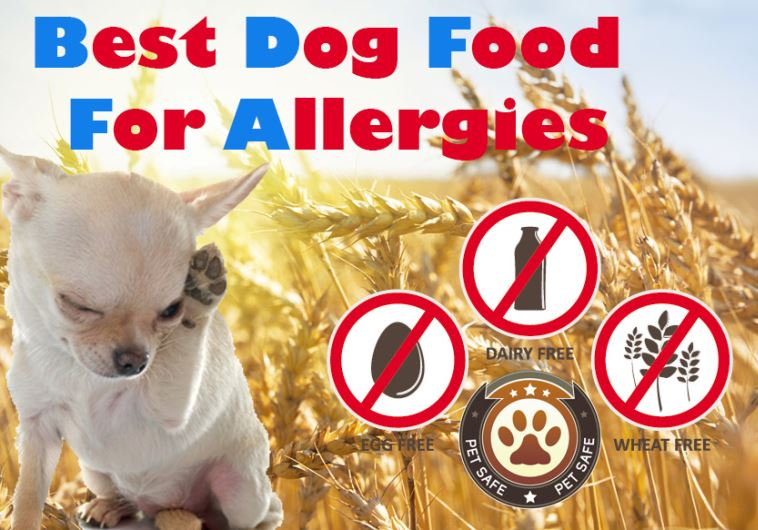 Best Dog Food For Allergies: The Guide To Finding The Non-allergenic Causing Food