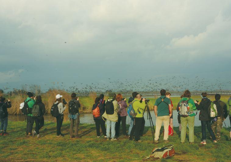 MEMBERS OF FIVE European environmental groups visit the Hula Valley last week