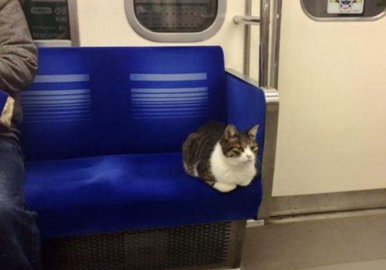 cat rides train in tokyo