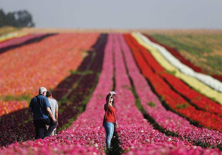 A WOMAN TAKES a selfie in a field of flowers near Kibbutz Nir Yitzhak, just outside the Gaza Strip