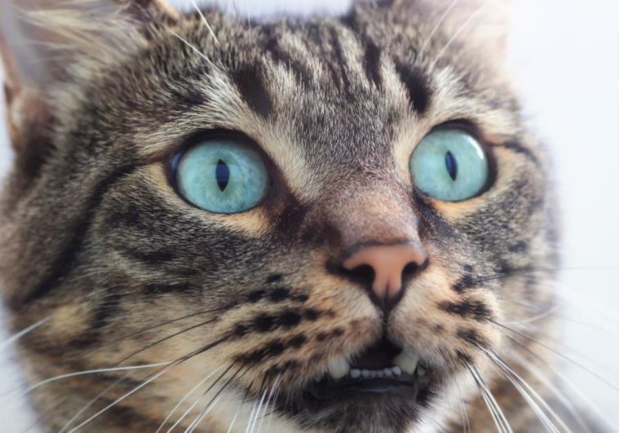 Photo illustration of cat