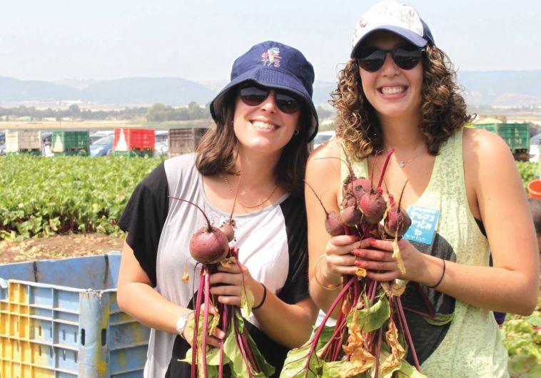Israel Volunteering
